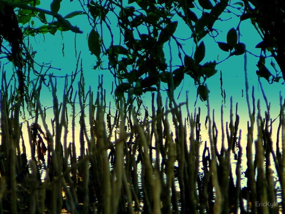 CROC CAM IN THE MANGROVES by EricKyle
