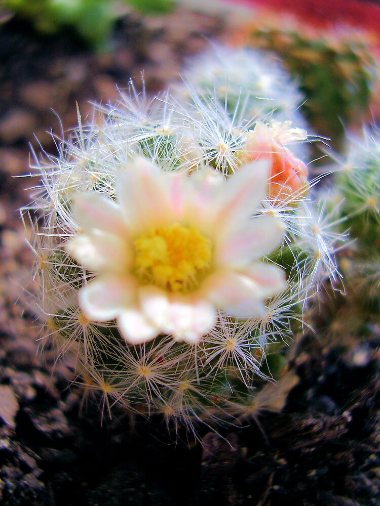 spiked bloom by Louise Richardson