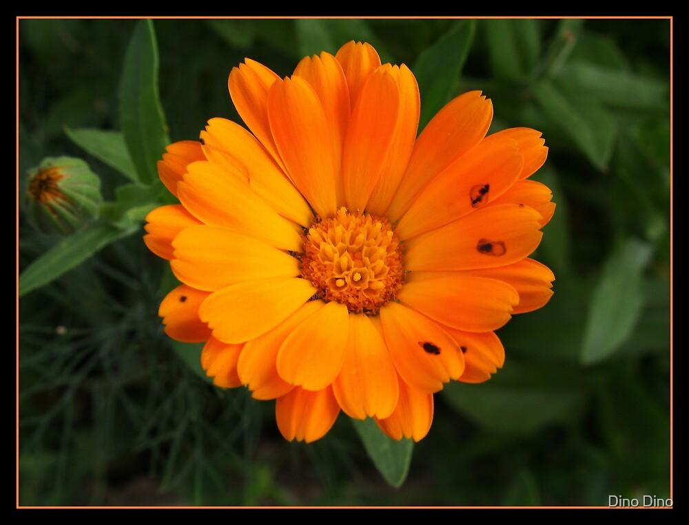 orange by Dino Dino