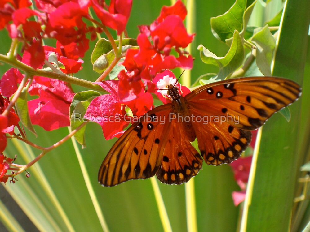 butterfly #2 by Rebecca Garibay Photography