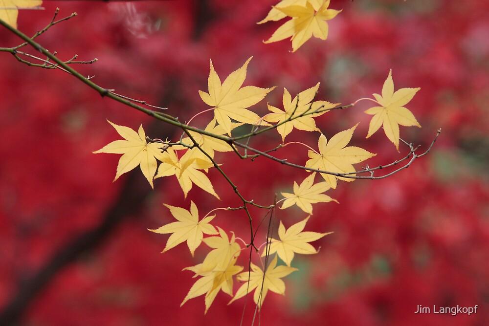 Yellow on Red by Jim Langkopf