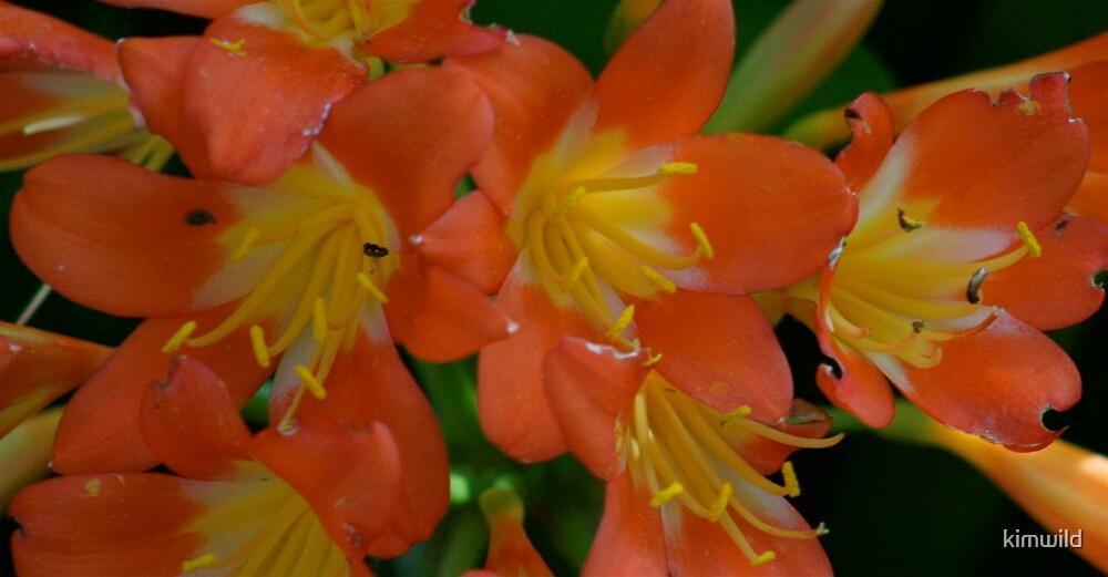 Sunshine flowers by kimwild