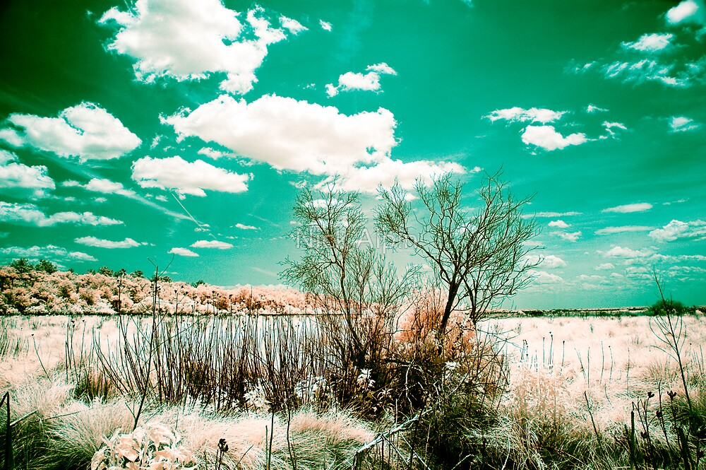 Infrared 01 by Nick Alpin