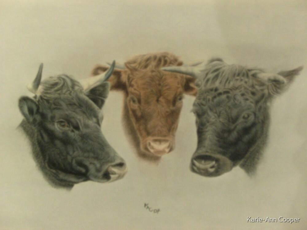 Three Dexter cows, Cilla, Constance and Bonnie by Karie-Ann Cooper