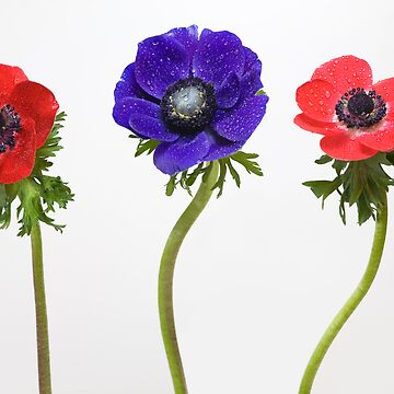 3 flowers by Gremlin