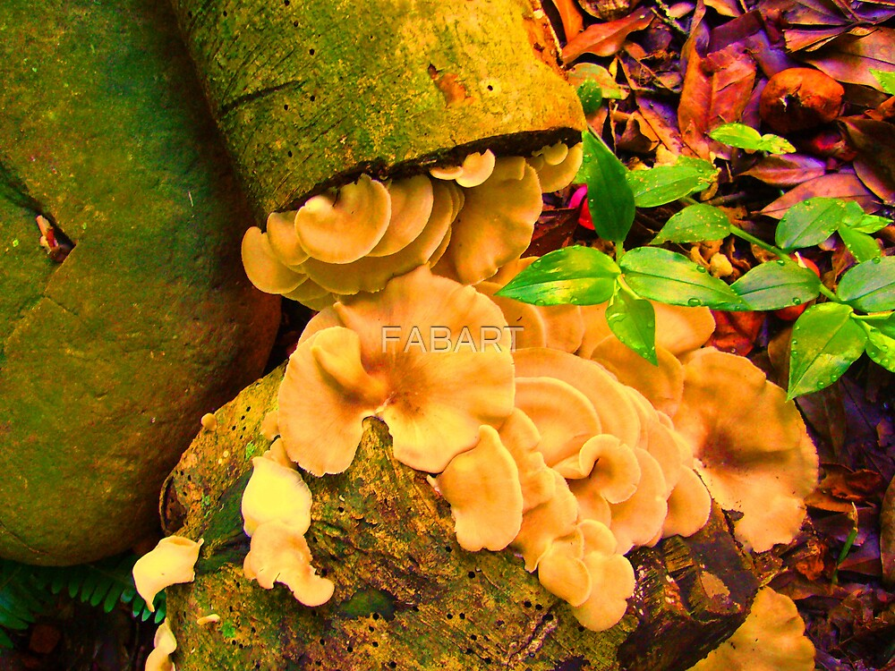 Fungi Rock by FABART