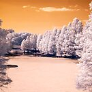 Infrared 07 by Nick Alpin