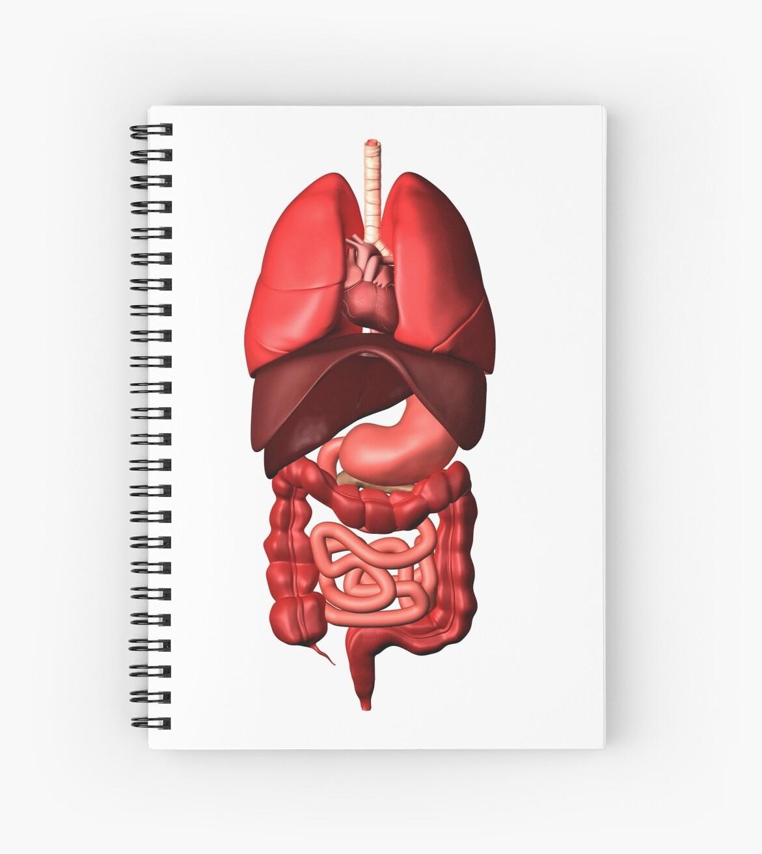 Cuadernos de espiral «Imagen conceptual de los órganos internos de ...