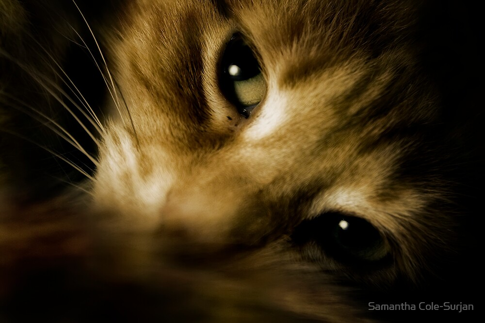 Sleepy cat by Samantha Cole-Surjan