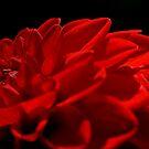 Razor Back Runs Red by GracefulShadow