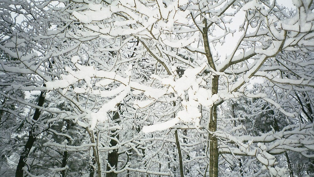 Snow on Branches by HELUA
