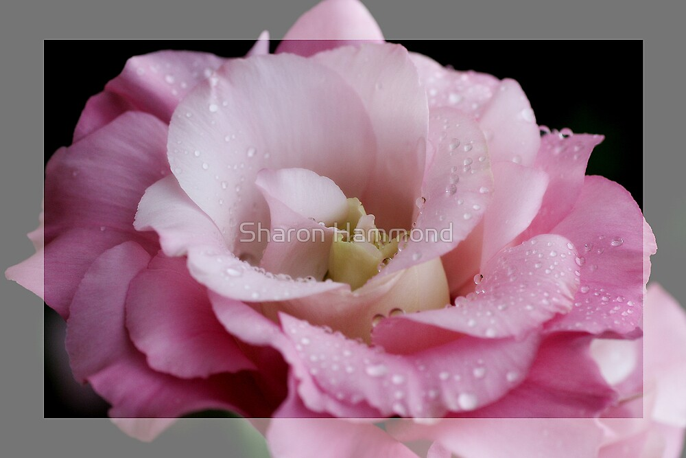 In The Pink by Sharon Hammond
