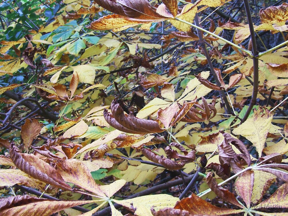 Autumn leaves by Paul Martin