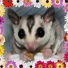Your Sugar Glider by Doty
