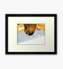 Horse Licks On Snow with Cute Paso Fino Horse Framed Print
