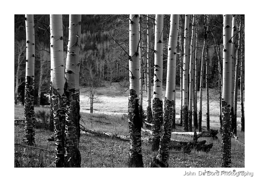 Enduring Aspens by John  De Bord Photography