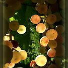 Tempo di Vendemmia III by thelightseeker