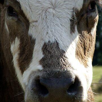 Cow by leizure