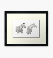 Two Horse Study Framed Print