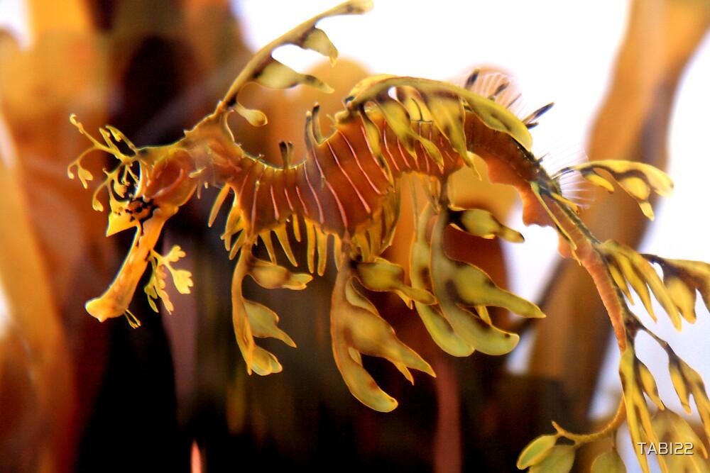 gentle seahorse by TABI22