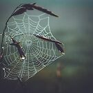 Spiderweb Dew Covered Entangled Nature Photograph by MissDawnM