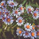 Autumn Flowers Beautiful Wildflowers Delicate Flowers Photo Flower Photography by MissDawnM