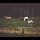 Horses in Country Field Three Horses Photograph Horse Photography Fine Art by MissDawnM