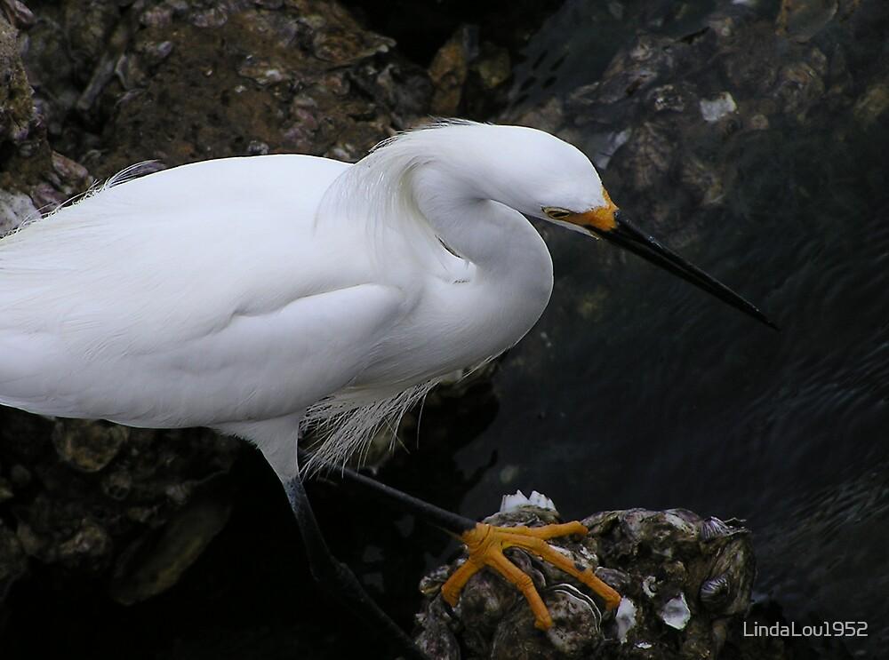 Snowy Egret by LindaLou1952