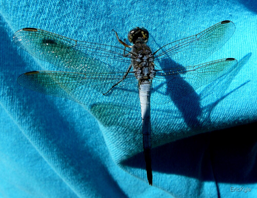 BLUE DRAGON FLY by EricKyle