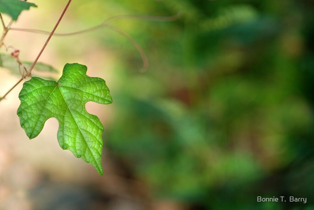 Wild Vine Leaf by Bonnie T.  Barry