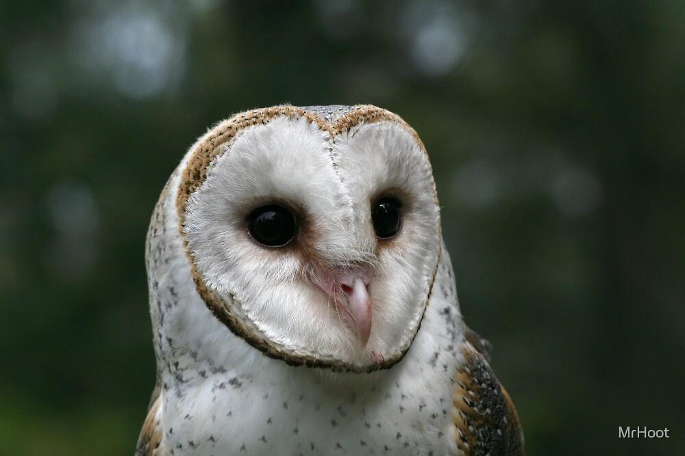 Barn Owl Face by MrHoot