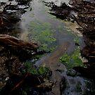 a river runs by Ashley Ng