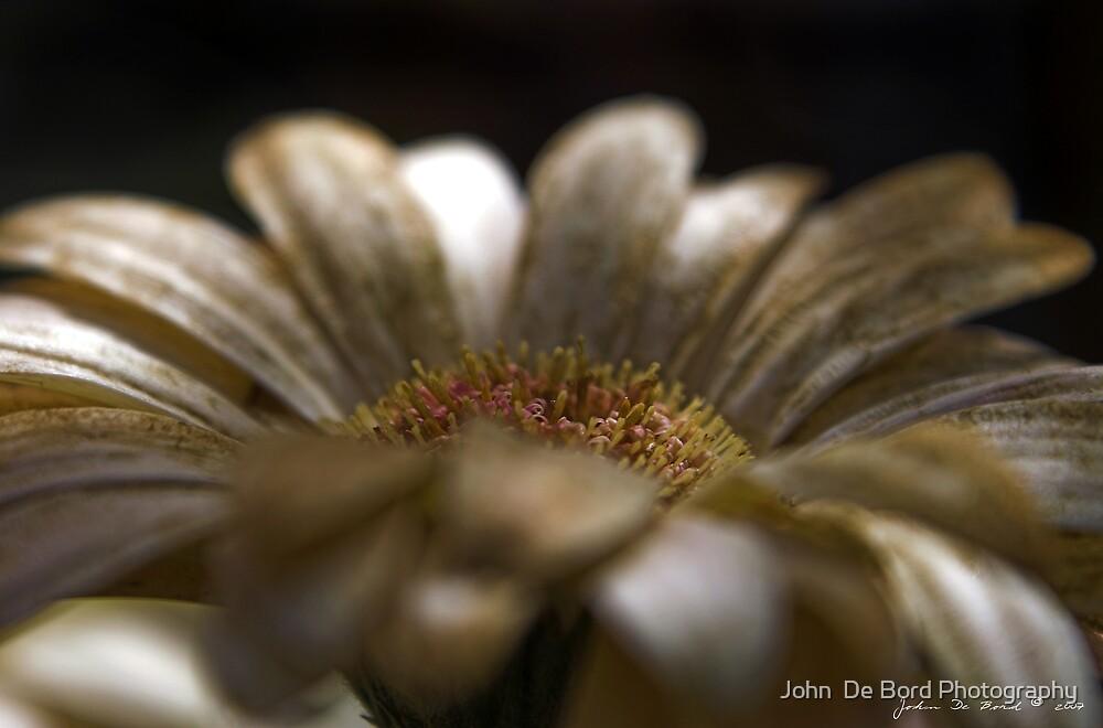 A Touch of Cinnamon by John  De Bord Photography