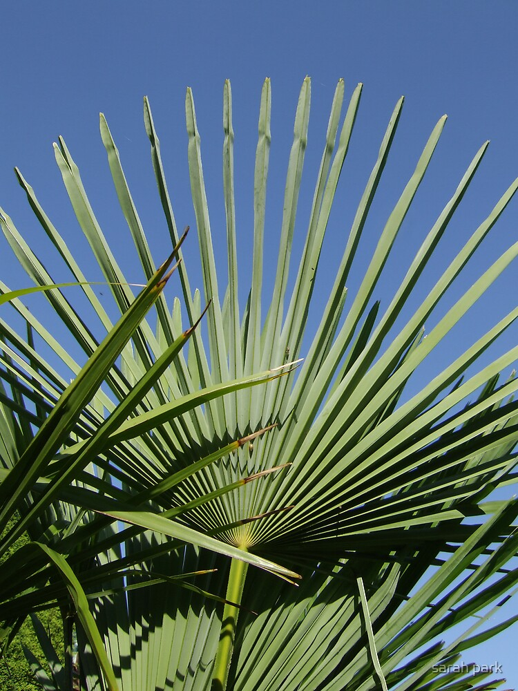 palm horizon I by sarah park