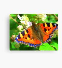 Tortoiseshell Butterfly Canvas Print