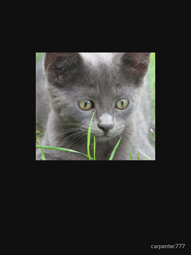 Kitten by carpenter777