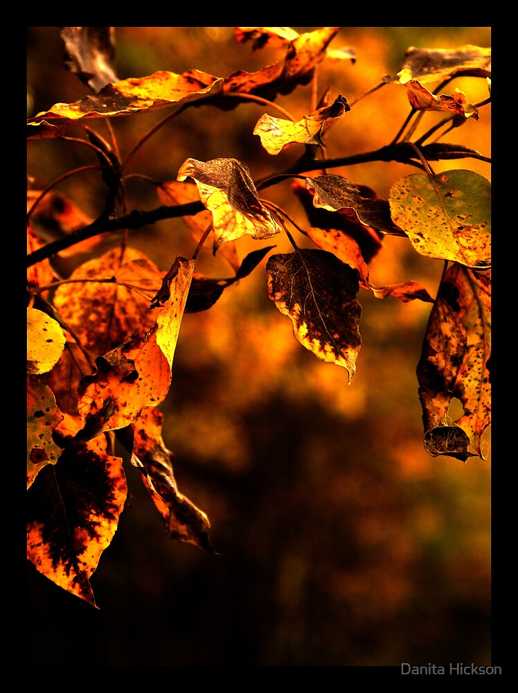 Rusty Autumn Leaves by Danita Hickson