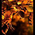 Rusty Autumn Leaves by Danita Hickson