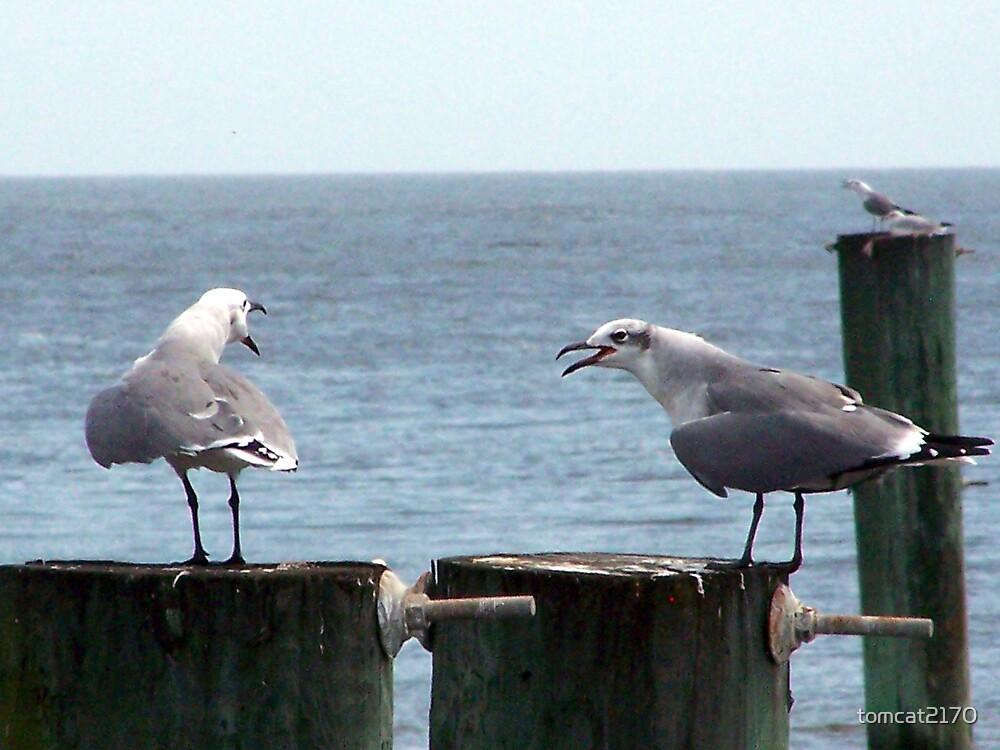 complaining gulls by tomcat2170