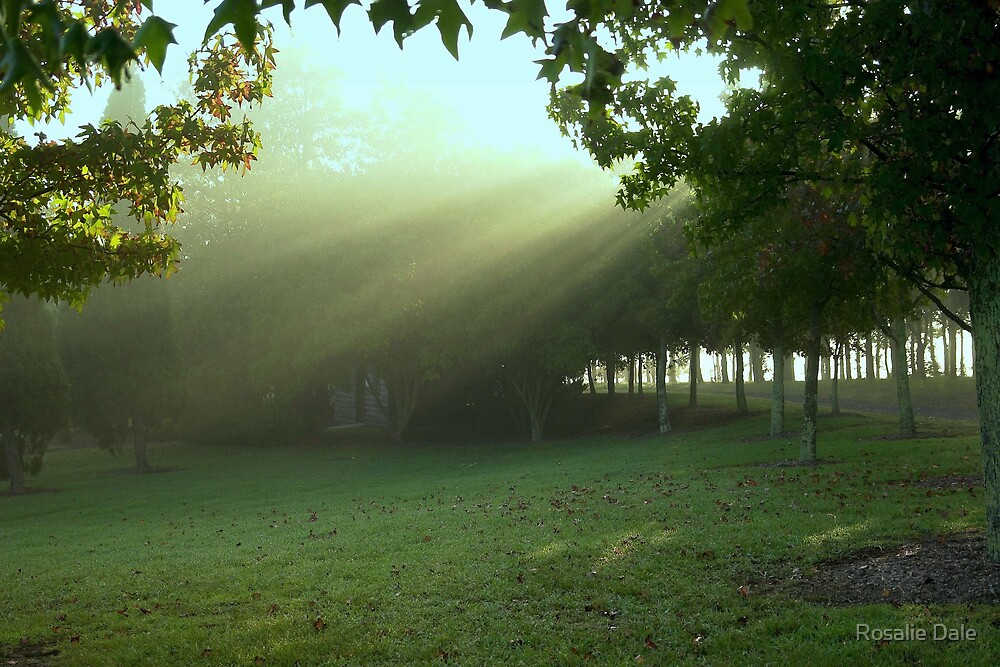 Early rays . . . by Rosalie Dale