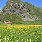 Field in Steigen- Norway by MHCM