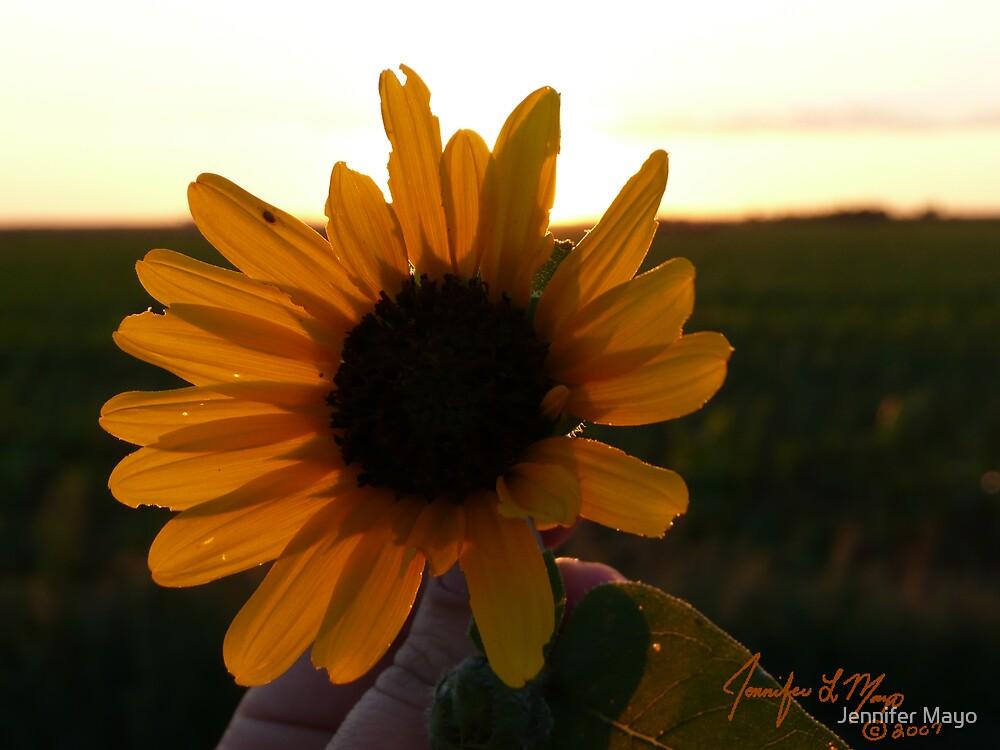 Basking in the Sun by Jennifer Mayo