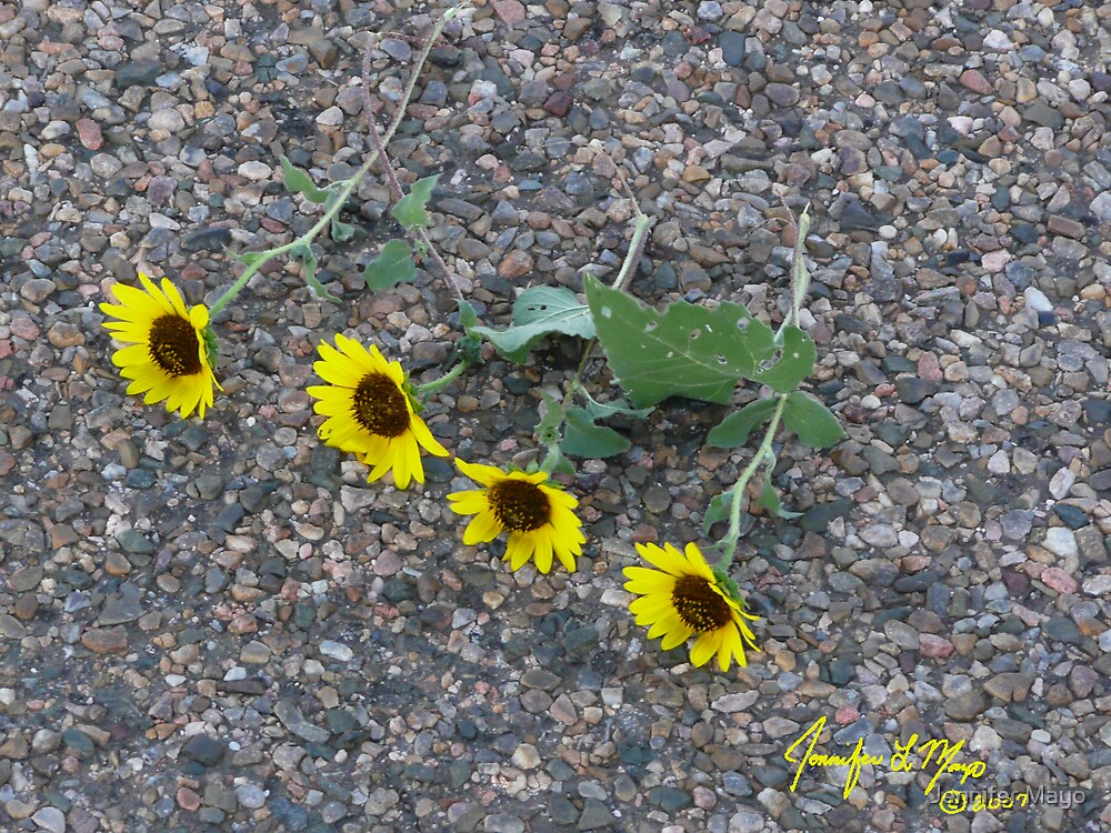 The Sunflower Suicides by Jennifer Mayo