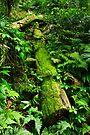 Rainforest by Darren Stones