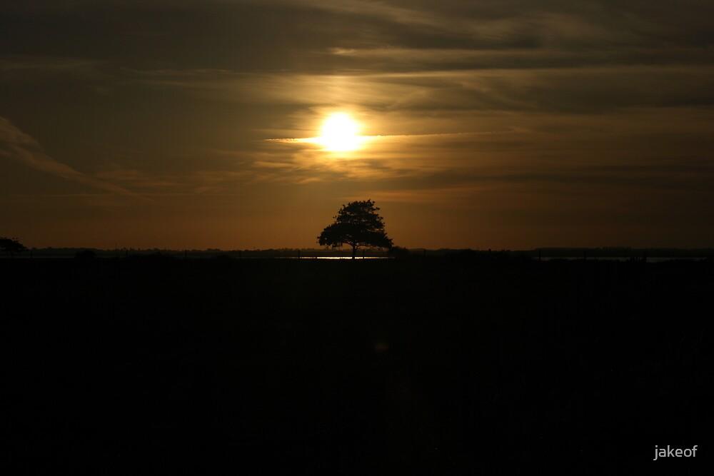 Good Night Little Tree by jakeof