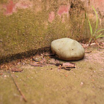 Mushroom by joel