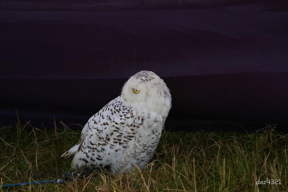 night owl by daz4321