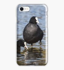 Eurasian Coots iPhone Case/Skin