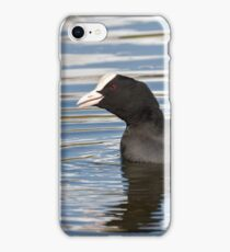 Eurasian Coots iPhone Case/Skin