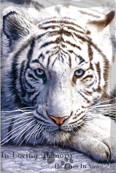 Tiger Memorial for Kat by guitargirl